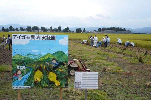稲刈り 015.jpg